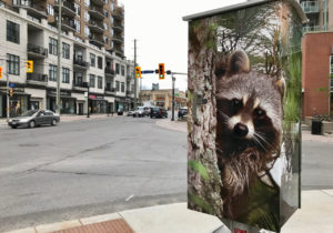 Michelle Valburg's photography in Westboro. Photo by Andrea Tomkins