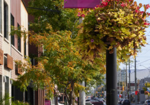 Fall in Westboro Village